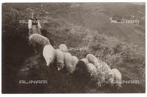 FVD-S-006542-0E14 - Pastora con gregge - Data dello scatto: 1895-1910 - Donazione Biondi / Archivi Alinari, Firenze