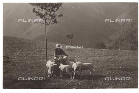 FVD-S-006542-0E15 - Paesaggio con gregge - Data dello scatto: 1895-1910 - Donazione Biondi / Archivi Alinari, Firenze