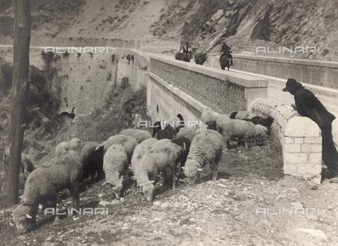FVD-S-006542-0E24 - Gregge presso un ponte - Data dello scatto: 1895-1910 - Donazione Biondi / Archivi Alinari, Firenze