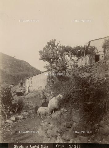 """FVQ-F-030289-0000 - """"Strada in Castel Mola"""": due pastorelle con pecore a Castelmola, Messina - Data dello scatto: 1890-1900 - Archivi Alinari, Firenze"""