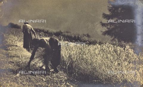 FVQ-F-040429-0000 - Contadine nei campi - Data dello scatto: 1930 ca. - Raccolte Museali Fratelli Alinari (RMFA), Firenze