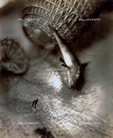 FVQ-F-045725-0000 - Natura morta pittorialista con pesci e reti - Data dello scatto: 1934 - Archivi Alinari, Firenze