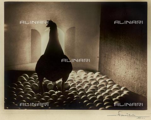 """FVQ-F-045727-0000 - """"A hen"""" - Data dello scatto: 1935 - Archivi Alinari, Firenze"""