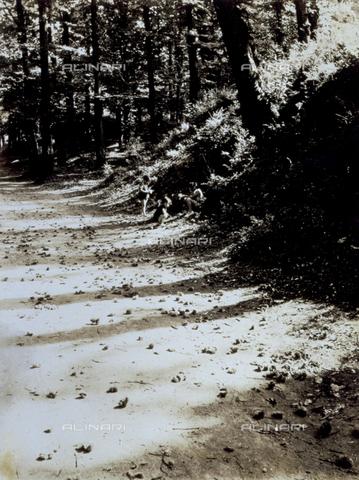FVQ-F-045739-0000 - Gioco d'ombre in una soleggiata strada di bosco. Sono fotografati i tre figli di Giulio Parisio - Data dello scatto: 193-1935 ca. - Archivi Alinari, Firenze