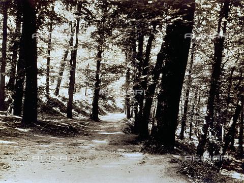 FVQ-F-045740-0000 - Angolo di bosco attraversato da un sentiero - Data dello scatto: 1930-1935 ca. - Archivi Alinari, Firenze