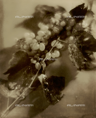 FVQ-F-045748-0000 - Natura morta pittorialista con grappolo d'uva - Data dello scatto: 1934 - Archivi Alinari, Firenze