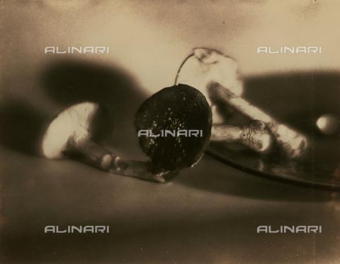 FVQ-F-045750-0000 - Natura morta pittorialista con funghi - Data dello scatto: 1934 - Archivi Alinari, Firenze