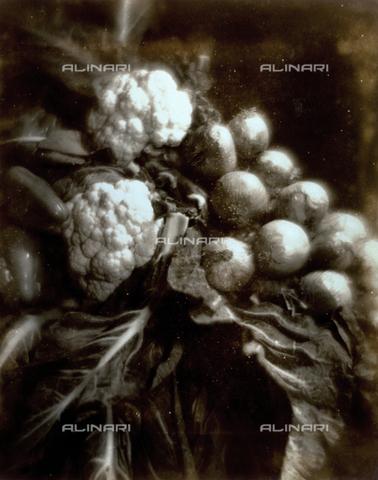 FVQ-F-045751-0000 - Natura morta pittorialista con cavoli, cipolle e peperoni - Data dello scatto: 1934 - Archivi Alinari, Firenze