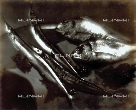 FVQ-F-045756-0000 - Pictorialist still life with fish - Data dello scatto: 1934 - Archivi Alinari, Firenze