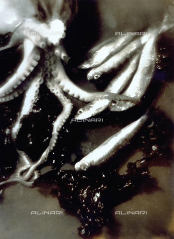 FVQ-F-045757-0000 - Pictorialist still life with fish and polyps - Data dello scatto: 1934 - Archivi Alinari, Firenze