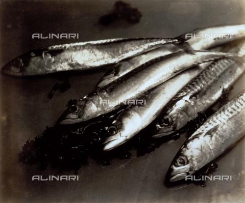 FVQ-F-045760-0000 - Natura morta con pesci - Data dello scatto: 1934 - Archivi Alinari, Firenze