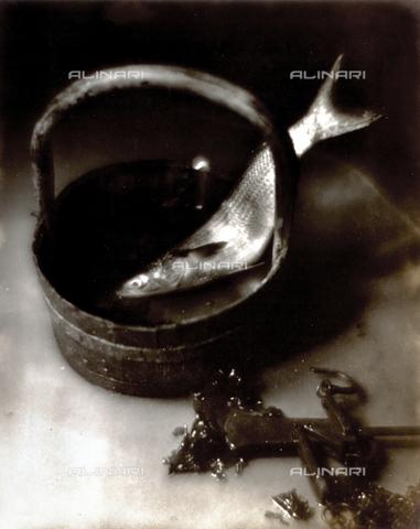 FVQ-F-045761-0000 - Natura morta pittorialista con pesce. La ripresa dall'alto mostra un pesce di medie dimensioni collocato dentro un secchio di legno. Accanto, parzialmente visibile, una stadera - Data dello scatto: 1934 - Archivi Alinari, Firenze