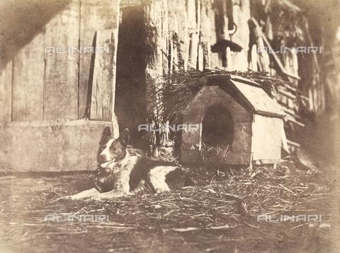 FVQ-F-050203-0000 - Un cane davanti alla sua cuccia; Francia - Data dello scatto: 1855 ca. - Archivi Alinari, Firenze