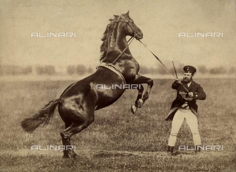 FVQ-F-083406-0000 - Domatore di cavallo - Data dello scatto: 1886 ca. - Archivi Alinari, Firenze