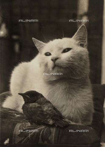 FVQ-F-102330-0000 - Cat and bird
