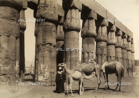 FVQ-F-121108-0000 - Camel trader in front of a colonnade of the courtyard of the festivals of Amenhotep III, in the temple of Luxor, Egypt - Data dello scatto: 1870 - 1880 - Archivi Alinari, Firenze
