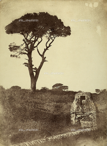 FVQ-F-141075-0000 - Pine tree at Villa Borghese, Rome - Data dello scatto: 1855-1860 - Archivi Alinari, Firenze