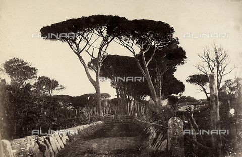 FVQ-F-141078-0000 - Pineta di Castel Fusano - Data dello scatto: 1855 ca. - Archivi Alinari, Firenze