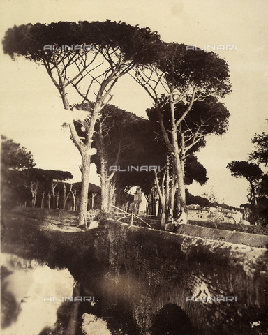 FVQ-F-141084-0000 - Tree-lined street of Villa Cavalieri, near Rome - Data dello scatto: 1855-1860 - Archivi Alinari, Firenze