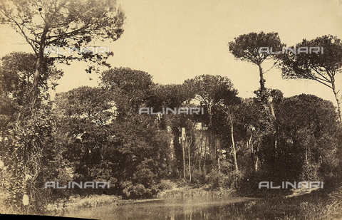 FVQ-F-141086-0000 - View of the Park of Villa d'Este, Tivoli - Data dello scatto: 1855-1860 - Archivi Alinari, Firenze