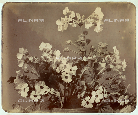 FVQ-F-157586-0000 - Flowers