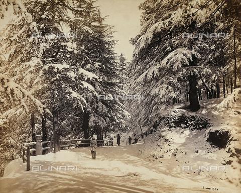 FVQ-F-206768-0000 - Viale innevato a Simla (Shimla), vicino alla catena montuosa dell'Himalaya, India - Data dello scatto: 1863 - 1870 ca. - Raccolte Museali Fratelli Alinari (RMFA), Firenze