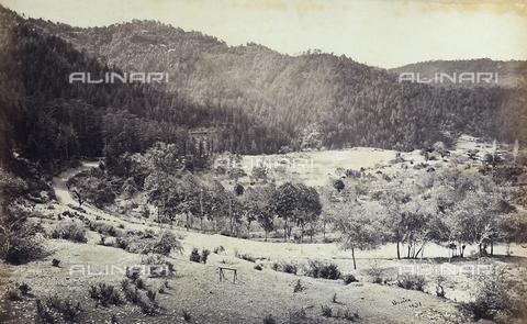 FVQ-F-206769-0000 - Paesaggio boschivo a Simla (Shimla), vicino alla catena montuosa dell'Himalaya, India - Data dello scatto: 1863 - 1870 ca. - Raccolte Museali Fratelli Alinari (RMFA), Firenze