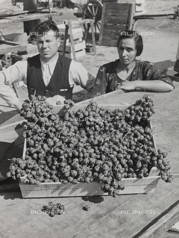 FVQ-F-209005-0000 - Cesta d'uva - Data dello scatto: 1920-1930 - Raccolte Museali Fratelli Alinari (RMFA), Firenze