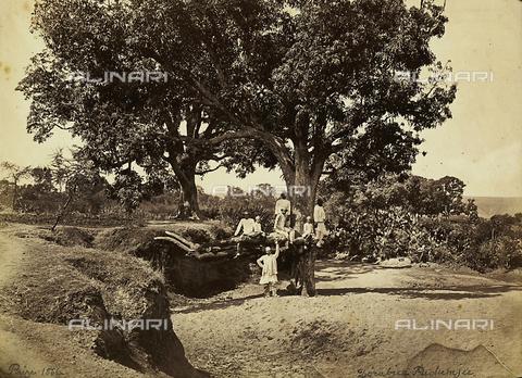 FVQ-F-210529-0000 - Alberi di mango nell'Hindostan. India - Data dello scatto: 11/02/1866 - Archivi Alinari, Firenze