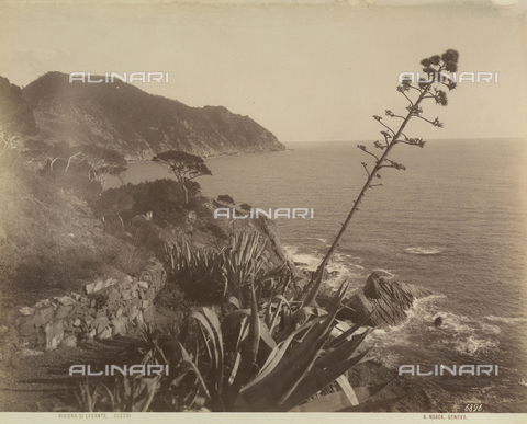 FVQ-F-211068-0000 - Stretch of the cliffs of Sestri Levante, Genoa - Data dello scatto: 1890 ca. - Archivi Alinari, Firenze