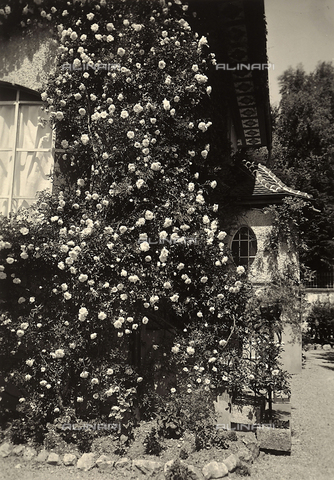 "GCQ-A-008552-0005 - Buildings constructed by ""Calori & Corti"" as a public works project, in Bienne: stairs of a house with a climbing rose bush"