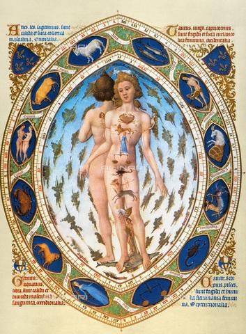 GRC-F-011815-0000 - Uomo anatomico con i segni zodiacali associati alle parti del corpo, miniatura tratta da 'Tres Riches Heures' di Jean, duca di Berry, Fratelli Limbourg (attivi 1385-1416), Musée Condé, Chantilly - Granger, NYC /Archivi Alinari