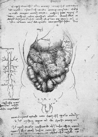 GRC-F-015808-0000 - Apparato digerente, disegno, Leonardo da Vinci (1452-1519) - Granger, NYC /Archivi Alinari