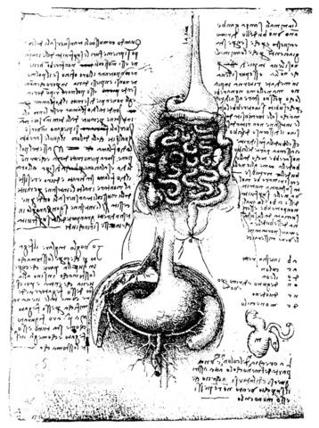 GRC-F-015809-0000 - Apparato digerente, gli organi sottodiaframmatici e l'intestino cieco e l'appendice vermiforme, disegno, Leonardo da Vinci (1452-1519) - Granger, NYC /Archivi Alinari