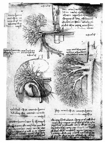 GRC-F-018374-0000 - Il sistema portale epatico, disegno, Leonardo da Vinci (1452-1519) - Granger, NYC /Archivi Alinari