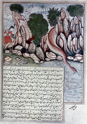 GRC-F-019384-0000 - Tahrusiya observes the white snake while drinking, miniature reproduced in the Indian Mughal Book of the late 16th century - Granger, NYC/Alinari Archives