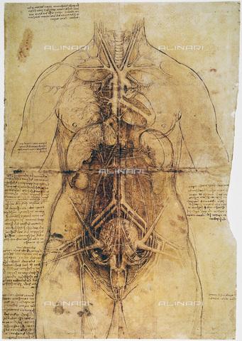 GRC-F-033664-0000 - Anatomia femminile, disegno a penna e inchiostro, Leonardo da Vinci (1452-1519) - Granger, NYC /Archivi Alinari