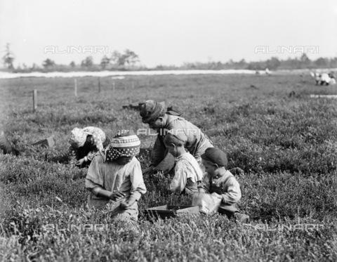 GRC-F-106275-0000 - Una famiglia italiana di agricoltori immigrati al lavoro mentre raccoglie le bacche a Brown Mills, New Jersey - Data dello scatto: 29/09/1910 - Granger, NYC /Archivi Alinari
