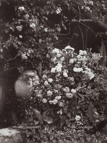 GWA-F-000120-0000 - In the garden of the Von Gloeden house - Data dello scatto: 1900 ca. - Archivi Alinari, Firenze