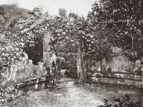 GWA-F-000131-0000 - In the garde of the Von Gloeden house - Data dello scatto: 1900 ca. - Archivi Alinari, Firenze