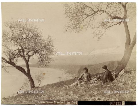 GWA-F-000304-0000 - Blossoming almond trees, Taormina - Data dello scatto: 1890 ca. - Archivi Alinari, Firenze