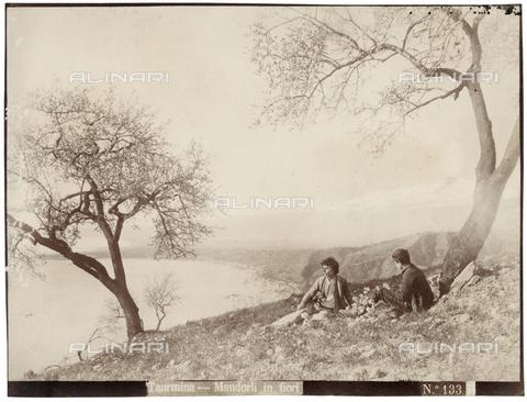 GWA-F-000305-0000 - Blossoming almond trees, Taormina - Data dello scatto: 1900 ca. - Archivi Alinari, Firenze