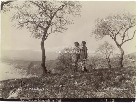 GWA-F-000311-0000 - Blossoming almond trees, Taormina - Data dello scatto: 1890 ca. - Archivi Alinari, Firenze