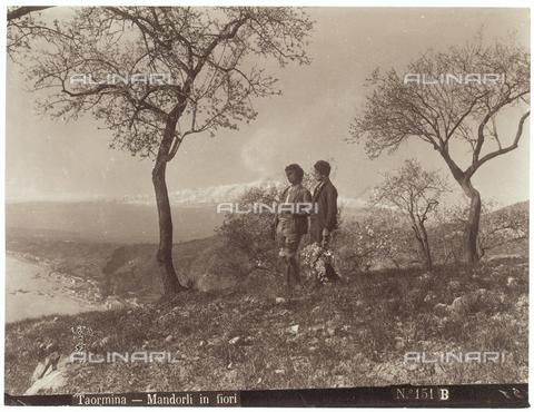GWA-F-000315-0000 - Blossoming almond trees, Taormina - Data dello scatto: 1890 ca. - Archivi Alinari, Firenze