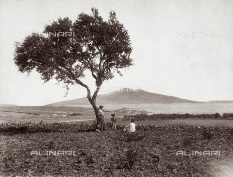 GWA-F-000364-0000 - Panorama of Augusta - Data dello scatto: 1900 ca. - Archivi Alinari, Firenze