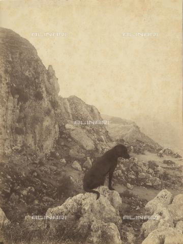GWA-F-000551-0000 - Dog sitting on rocks, Taormina - Data dello scatto: 1900 ca. - Archivi Alinari, Firenze