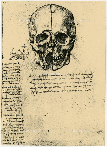 HIP-S-000115-5850 - Anatomical study of a human skull, drawing, Leonardo da Vinci (1452-1519) - Ann Ronan Picture Library / Heritage Images /Alinari Archives, Florence