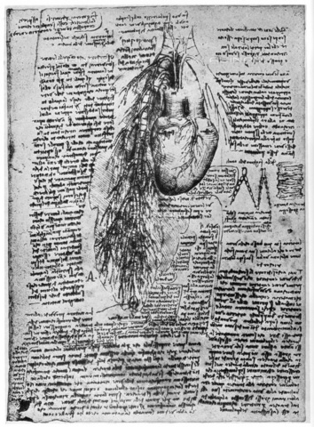 "HIP-S-000232-0685 - Study of the heart and the bronchial arteries, drawing by Leonardo da Vinci (1452-1519), preserved in the Royal Library of Windsor Castle, taken from ""Leonardo da Vinci"" by Ludwig H Heydenreich (London, 1954) - The Print Collector / Heritage Images /Alinari Archives, Florence"