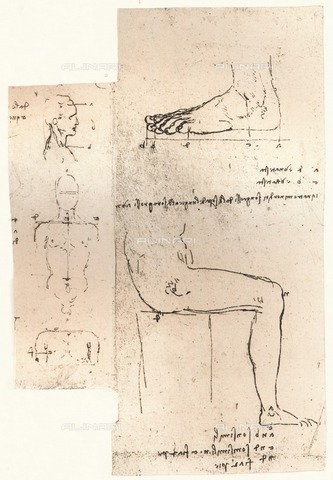 "HIP-S-000262-2705 - Studies on the proportions of the human figure, drawing, Leonardo da Vinci (1452-1519), from ""The Literary Works of Leonardo Da Vinci"" by Jean Paul Richter (London, 1883) - The Print Collector / Heritage Images /Alinari Archives, Florence"