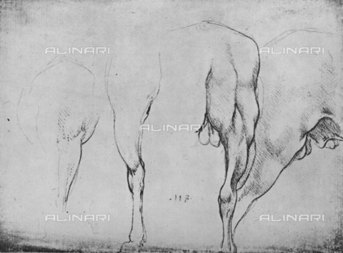 "HIP-S-000264-7693 - Studies of horses (RL 12306r), drawing by Leonardo da Vinci (1452-1519) preserved in the Royal Library of Windsor Castle, from ""The Drawings of Leonardo da Vinci"" (New York, 1945) - The Print Collector / Heritage Images /Alinari Archives, Florence"